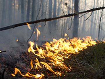 В Свердловской области хозяйничает огненная стихия
