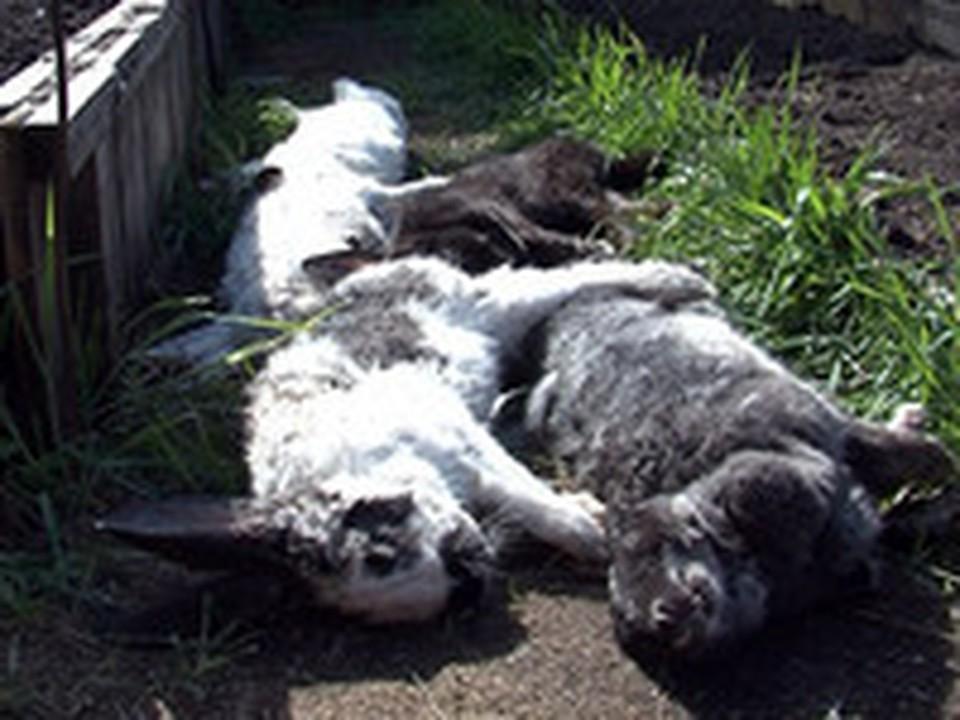 В Копейске вампир убивает домашних животных