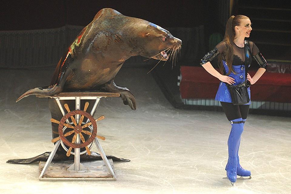 Уникальное шоу «Остров грез» в Цирке на проспекте Вернадского готово удивить москвичей и гостей столицы!