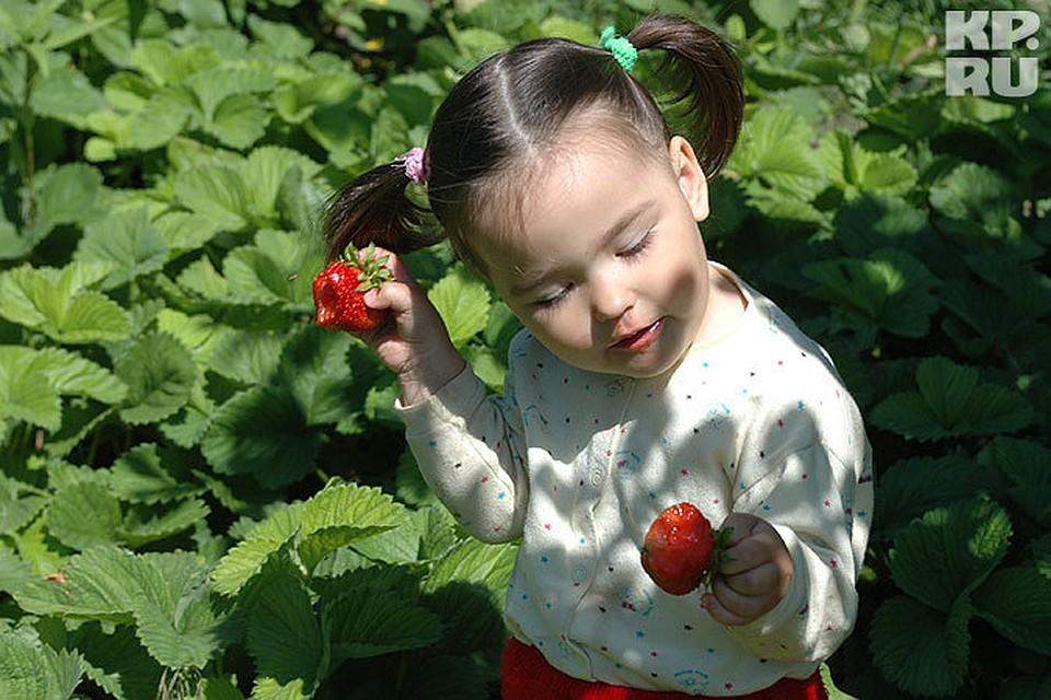 Купить семена гава искои розы купить цветы недорого ювао