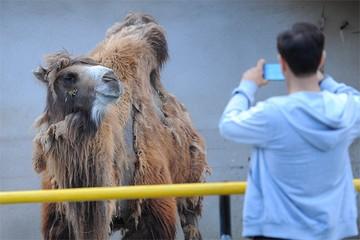 В Московский зоопарк начали водить «ночные» экскурсии