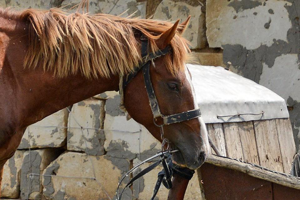 Под Луганском кони гибнут от голода