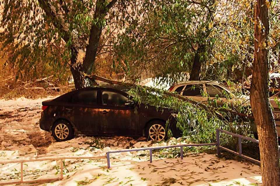 Ледяной дождь в Челябинске погубил деревья, повредил автомобили и остановил трамваи
