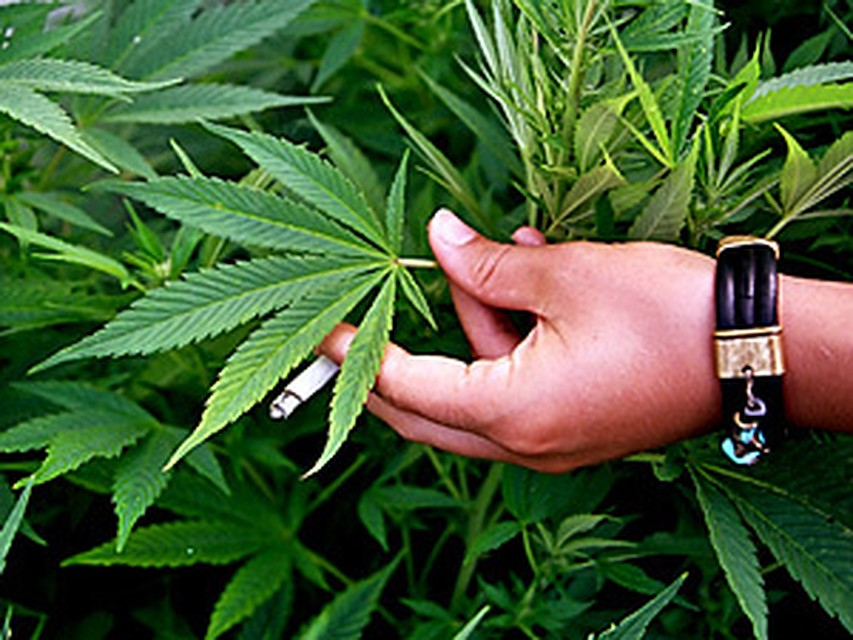 Реагент для марихуаны текст песни любовь марихуана