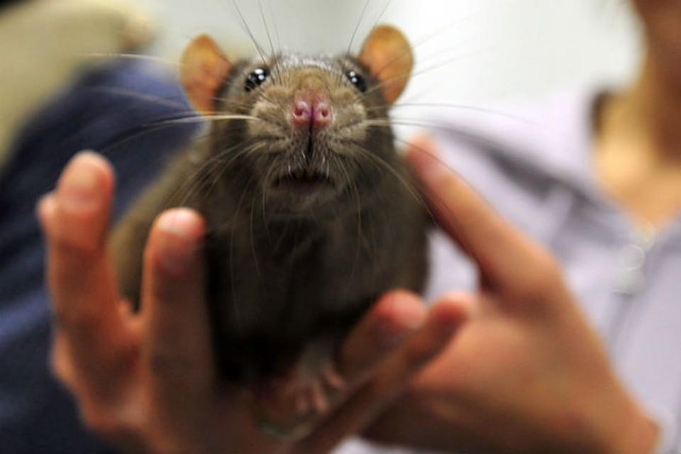Руб-эль-Хали считается кот заразится бешенством от крысы качественному подходу