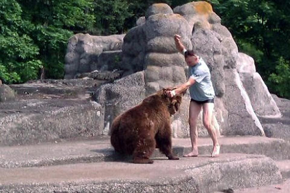 нападение медведя на мужчину в парке берне испарять поверхности