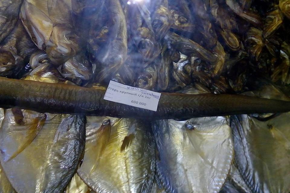 На Нарочи копченый угорь стоит 600 тысяч за килограмм.
