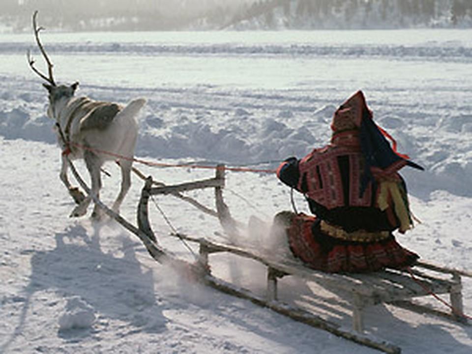Знания, обычаи и традиции оленеводов Ямала будут использованы в учебных программах по оленеводству
