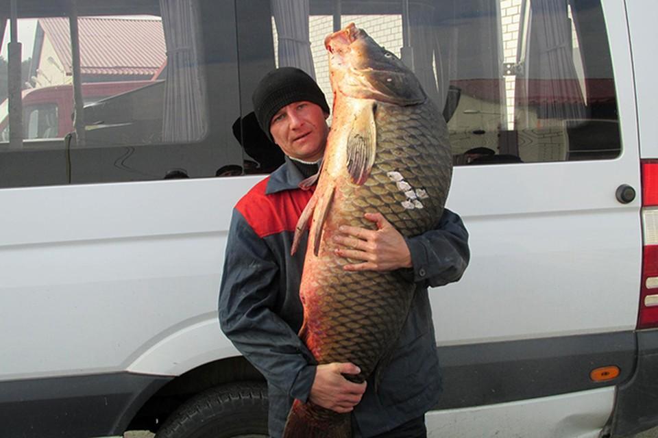 Рыбак из Кобрина выловил 30-килограммового сазана. Фото: из личного архива Виктора Гириса.