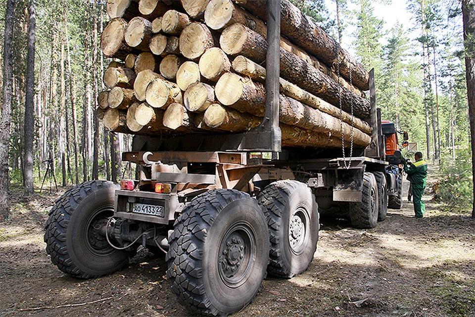 В России растет 25% лесного фонда планеты, что сопоставимо со всеми лесами Бразилии, США и Канады