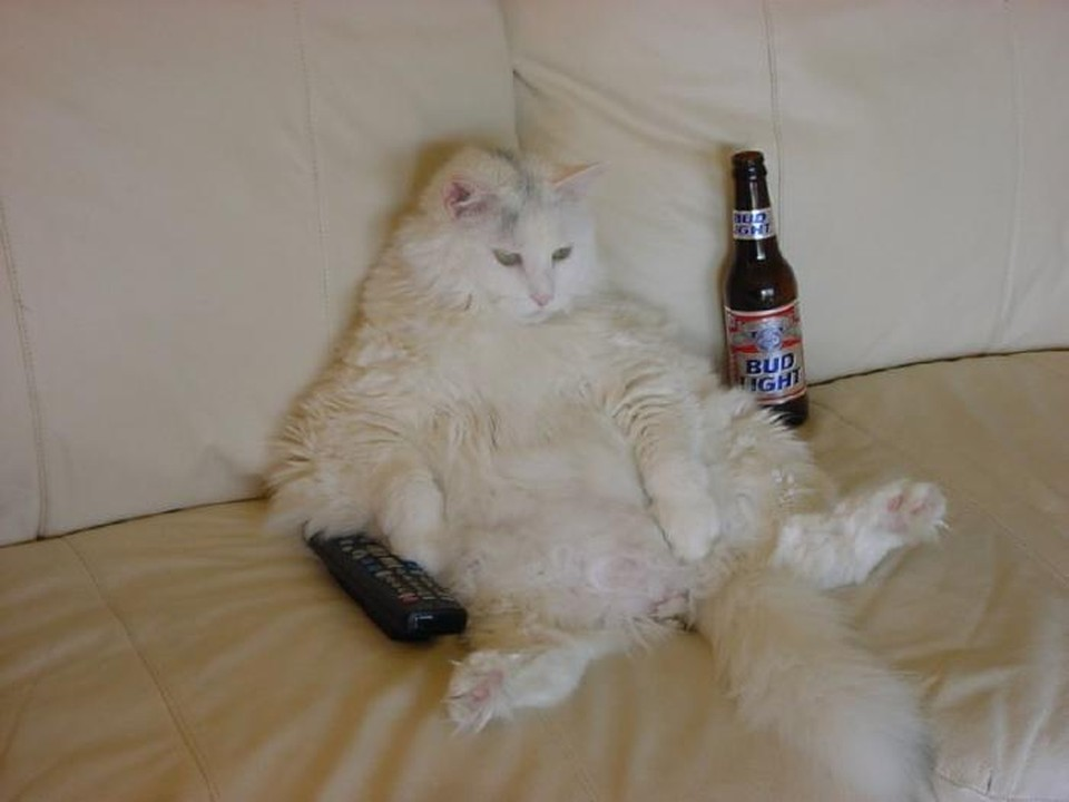 Пита Торна возмутило, что люди вечно смеются над толстыми котами