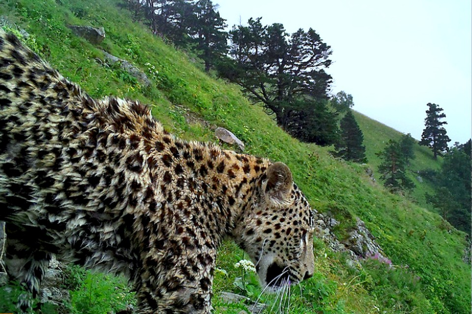Фото: WWF России.