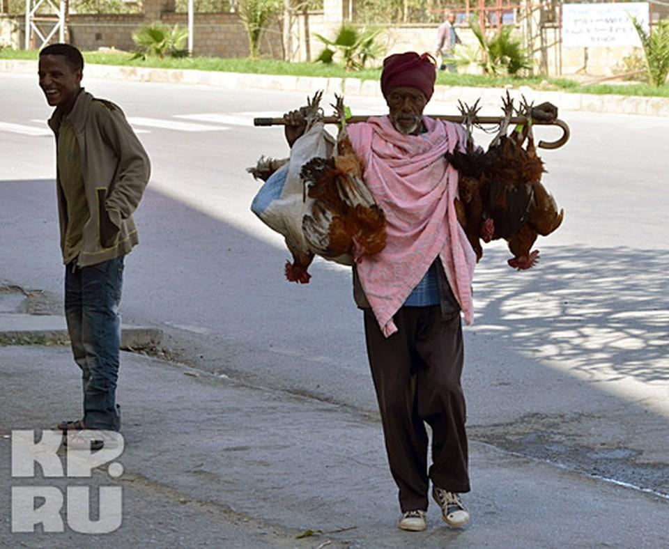 Эфиопская трость является оружием и подспорьем в быту