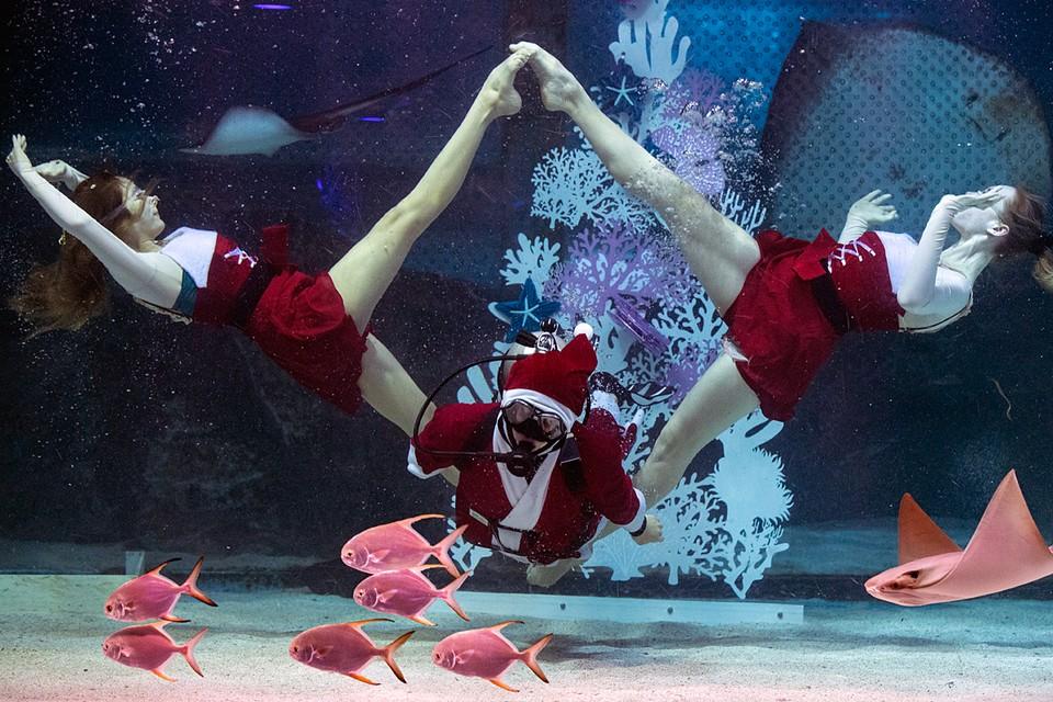Санта Клаус и Снегурочки на дне морском: Это рождественское шоу в океанариуме Сеула