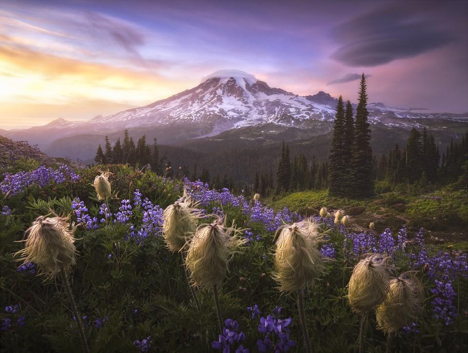 Определены победители международного конкурса пейзажной фотографии 2020 года. Фото: Joshua Snow/ILPOTY 2020