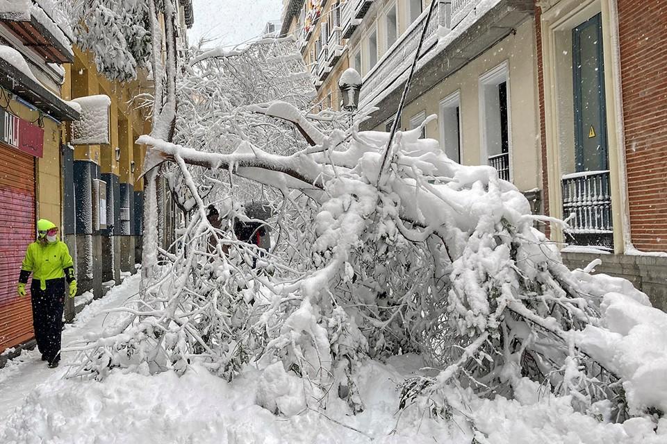 На Мадрид обрушился сильнейший за последние 50 лет снегопад. Из-за снега попадали десятки деревьев, а самым удобным способом передвижения по центру столицы Испании стали лыжи.