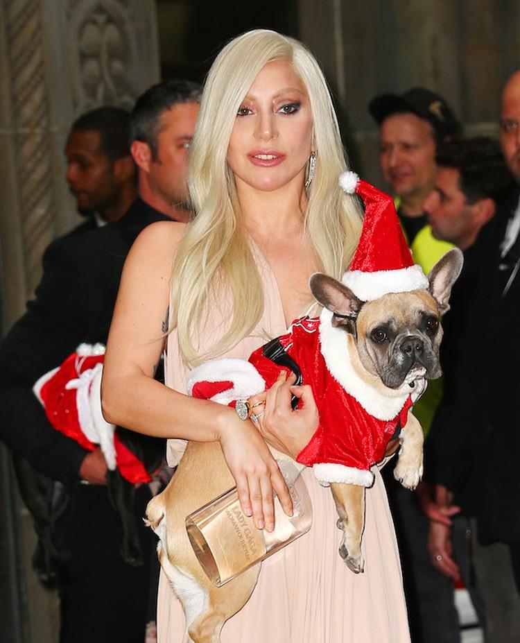 Артистка взяла с собой на вручение премии своих собак.