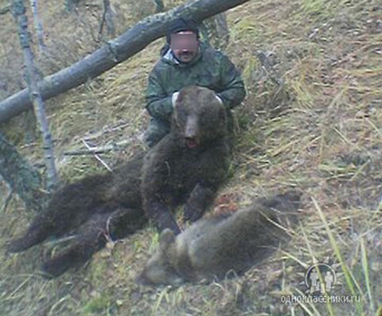 Пользователи соцсетей задают резонный вопрос: зачем нужно было убивать медвежонка? Фото: со страницы Николая П. в «Одноклассниках»