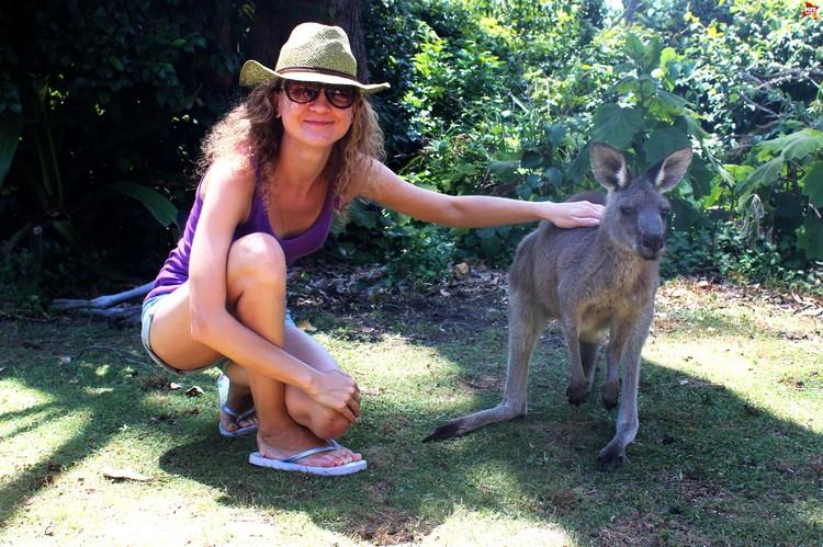 Ручные кенгуру на Пебли бич, недалеко от Канберры. Фото: автора.