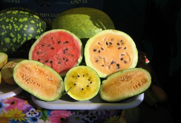 Арбузы с оранжевой и желтой мякотью гурманы уже оценили. Фото ВНИИОБ.