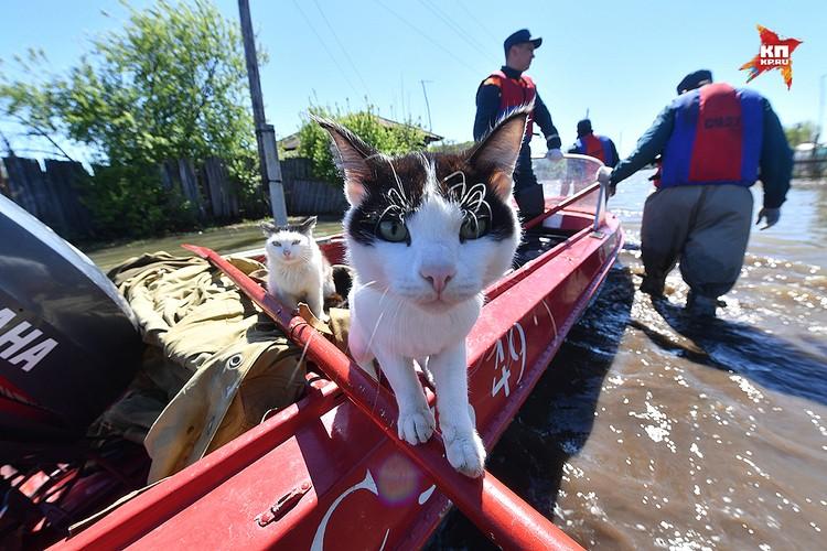 Хозяева побросали в затопленных домах котов