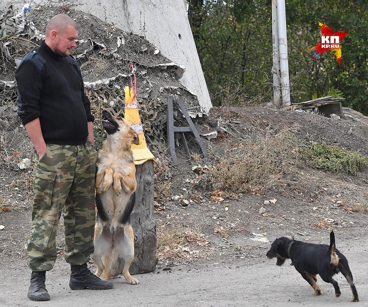 Бойцы и собаки передовой.