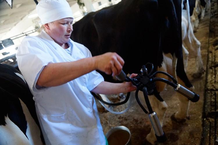 По мнению крупнейших игроков на молочном рынке, 1 кг или литр продукции подорожает на 4,5 рубля или 10%