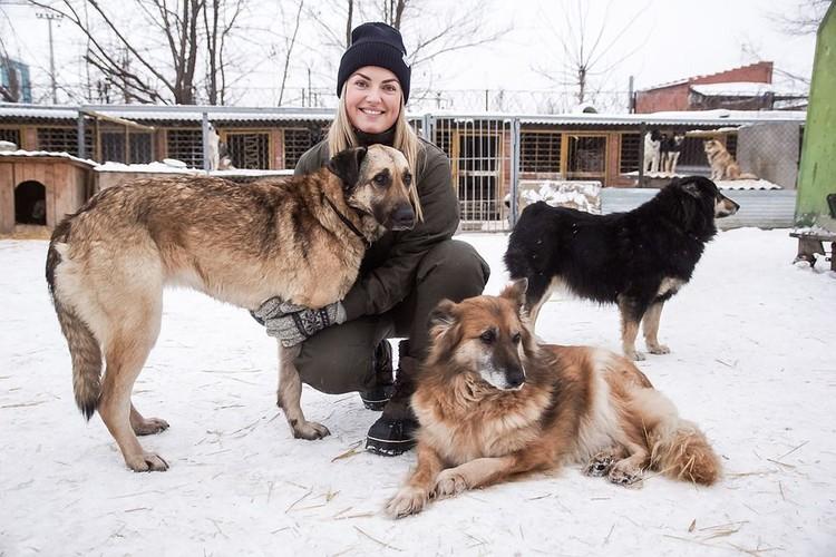 Шелина в Самаре сдружилась не только с Радой, но и с другими собаками