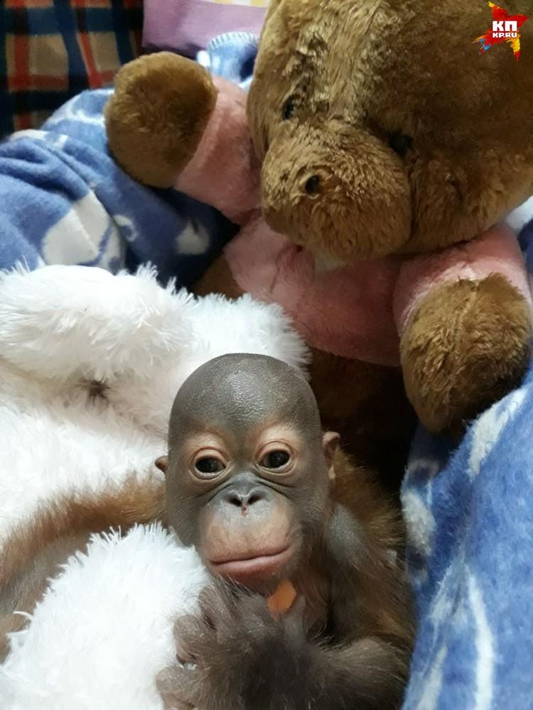 В Новосибирске врачи смогли спасли жизнь детенышу. Фото предоставлено Евгением Козловым, ветеринаром клиники Бэст.