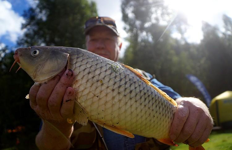 В том случае, когда суточная норма добычи установлена по весу и выловлен 1 экземляр с весом, превышающим суточную норму добычи, штрафовать любителя-рыболова не будут