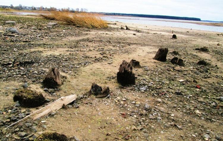 То, что осталось от старинного парка. Фото: Татьяна Вавилова