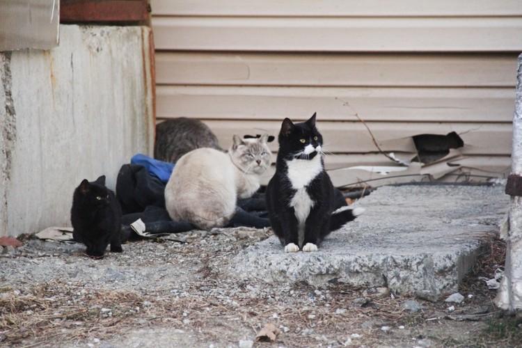 В первые минуты на месте было 4 кота