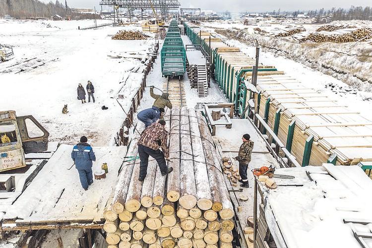 Лес идет в Китай. Экономисты спорят: для России это дорога жизни или ровно наоборот?