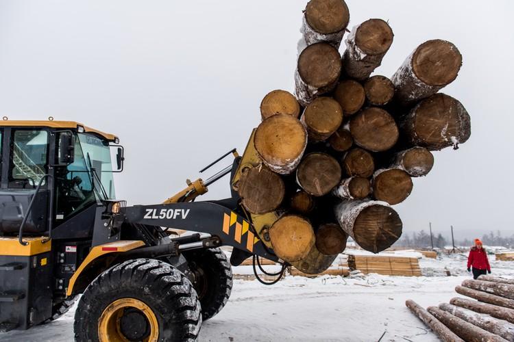 Сортировка леса в тайге