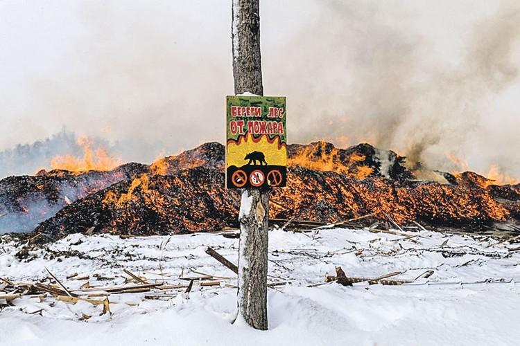 Напоминания «Береги лес от пожара!» выглядят тут издевательски. Лес вырублен. А отходы его распила сжигают прямо на месте.