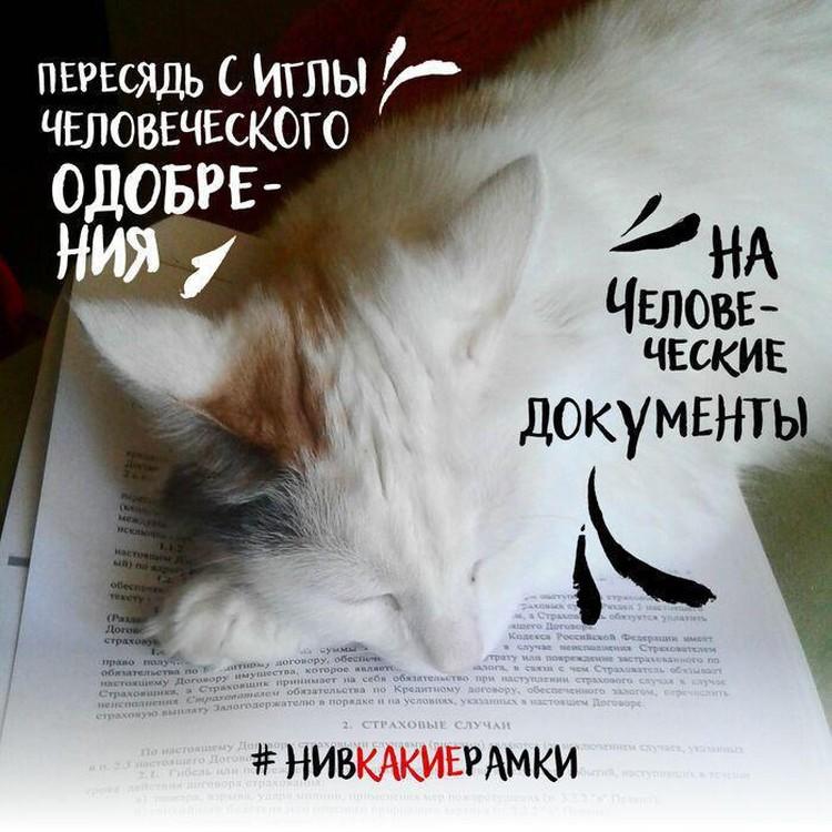 Даже котики втянулись во флешмоб.