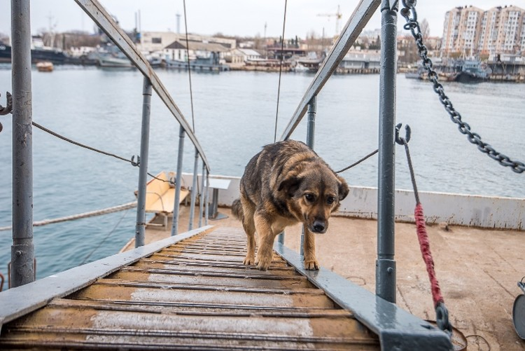 Вишня щенком прибилась к судну, после того как ее маму загрызла овчарка. На палубе у нее и Блэка есть свой кубрик - моряки сколотили будку.