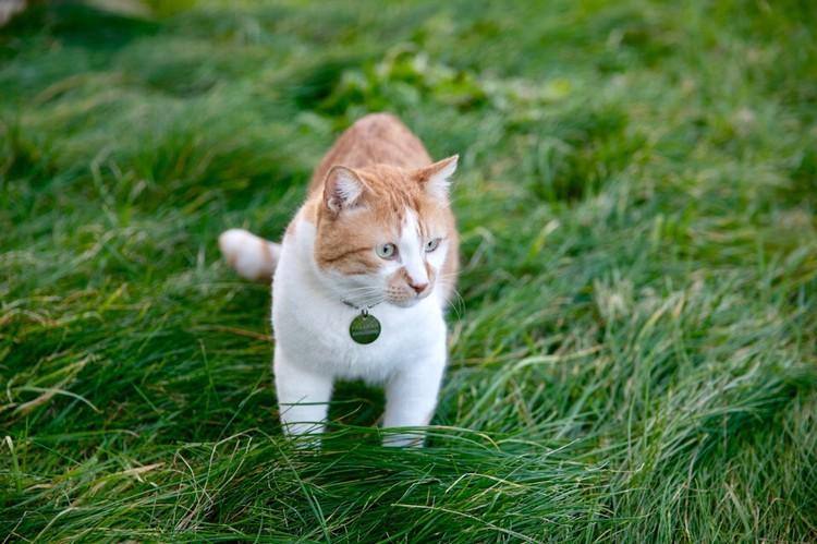 Кот сел на травяную диету. Фото: Кот Моста/VK