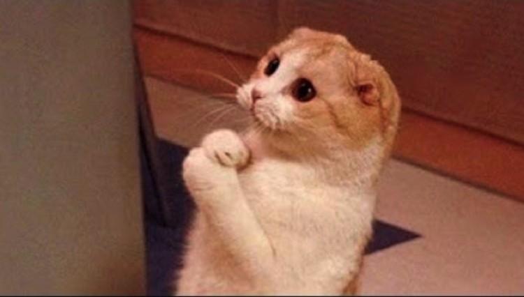 Кошки приходят на зов, когда им что-то от вас надо.