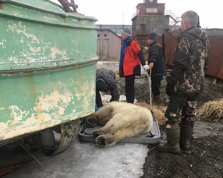 Транквилизатор для медведя везли из Хабаровска