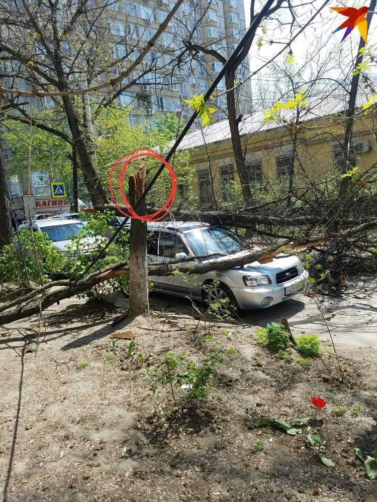 От рухнувшего дерева остался только пень