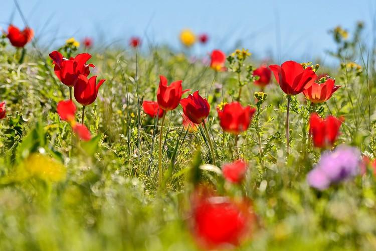 Срывать эти цветы нельзя, можно только любоваться.