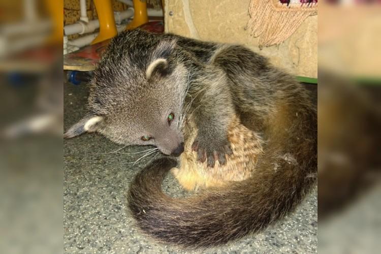 Белла уже нашла себе нового друга, им стал местный сурикат по кличке Кипиш. Фото: соцсети иркутской зоогалереи.