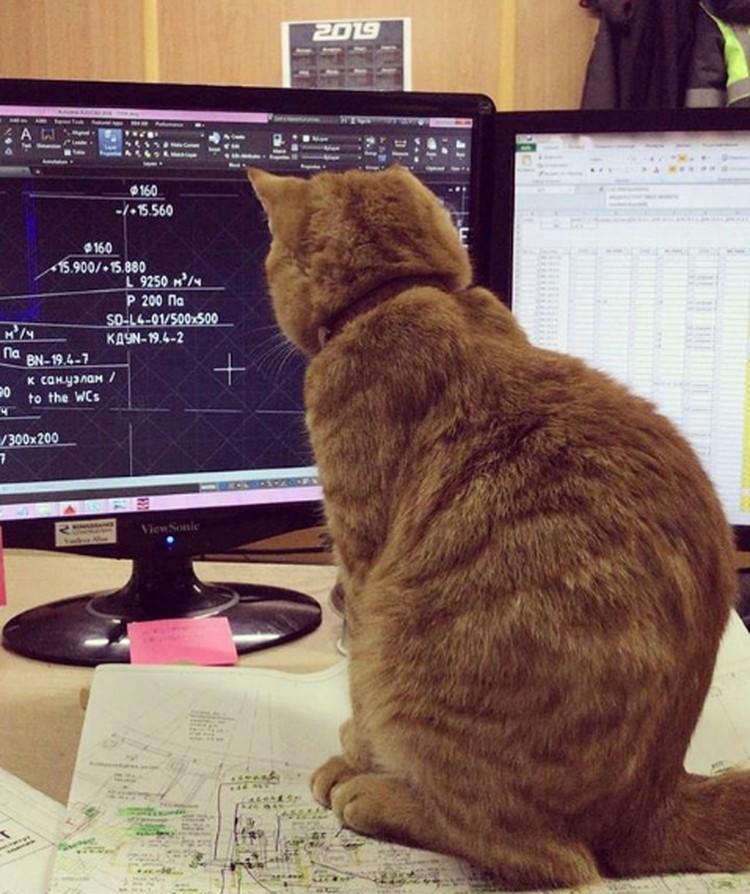 Кот-инженер всегда очень внимателен на работе