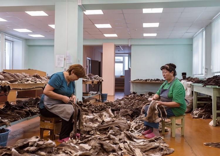 Закройщицы фабрики Сардaана сортируют оленьи шкуры для унтов, зимней обуви на Севере. Фото: Алексей Васильев.