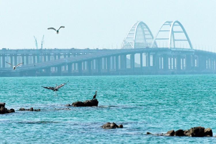 Птицы облюбовали окрестности моста. Фото: Кот Моста/VK