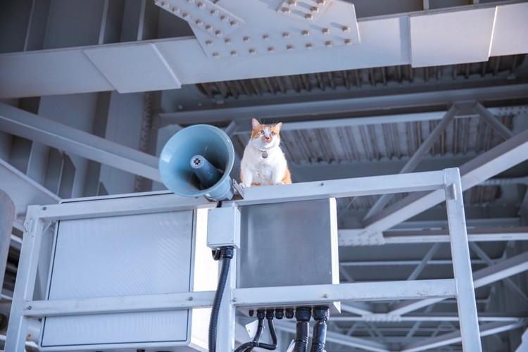 Высоко сижу, громко мяукаю! Фото: Кот Моста/VK