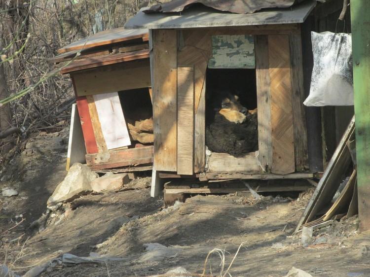 По результатам соцопоросов, больше половины воронежцев сочувствуют беспризорным животным и всячески им помогают