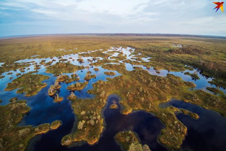 С высоты птичьего полета открывается удивительный вид на болото.