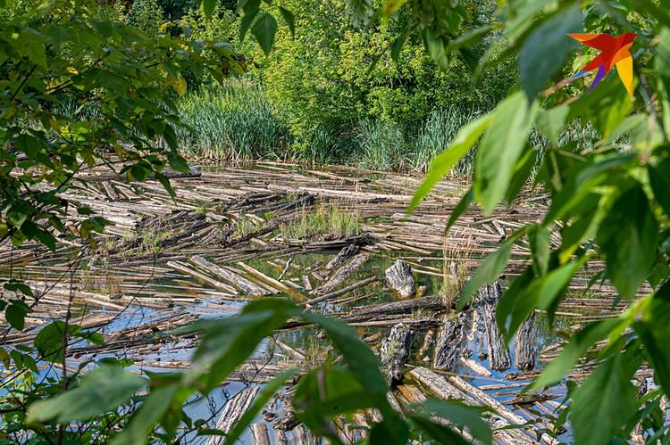Озеро завалено бревнами